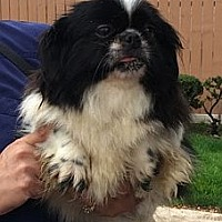 Adopt A Pet :: TAMI - Rossford, OH