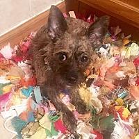 Adopt A Pet :: Laney May - Sharon Center, OH