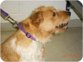 Terrier (Unknown Type, Medium) Mix Dog for adoption in Lockhart, Texas - Sandy
