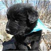 Adopt A Pet :: Tucker - Rigaud, QC