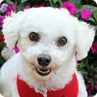 Adopt A Pet :: Fancie - La Costa, CA
