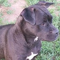 Adopt A Pet :: Bonnie - Post, TX