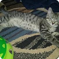 Adopt A Pet :: 2-LOUIE - Delmont, PA