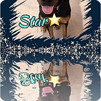 Adopt A Pet :: Star - Gilbert, AZ