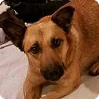 Adopt A Pet :: Georgia - Staunton, VA