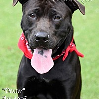 Adopt A Pet :: Dexter - Newnan City, GA