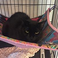Adopt A Pet :: Matilda - Lunenburg, MA