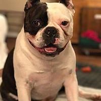 Adopt A Pet :: Astro - Courtland, AL