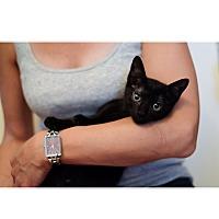 Adopt A Pet :: Sasha - Staten Island, NY