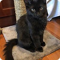 Adopt A Pet :: Finn - Prescott, AZ