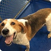 Adopt A Pet :: H. H. - New Kent, VA