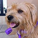 Adopt A Pet :: Jeter