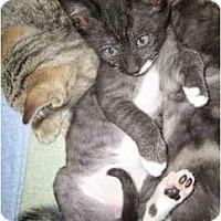 Adopt A Pet :: Anubis - Davis, CA