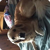 Adopt A Pet :: Julie - Brant, ON