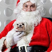 Adopt A Pet :: Lilly - Shawnee Mission, KS