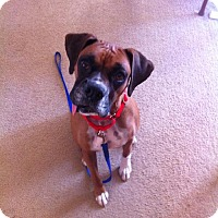 Adopt A Pet :: Pixie - Brentwood, TN