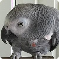 Adopt A Pet :: Rainbow - Asheville, NC