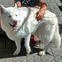 Adopt A Pet :: Bucca - Boyertown, PA