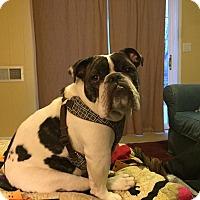 Adopt A Pet :: Blue - Columbus, OH