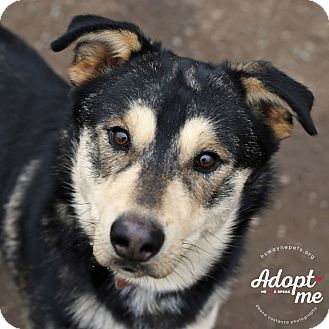 Husky Mix Dog for adoption in Lyons, New York - R.C.