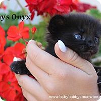 Adopt A Pet :: Raven - Temecula, CA