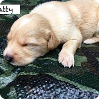 Adopt A Pet :: Patty Schultz - Alpharetta, GA