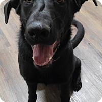 Adopt A Pet :: Georgia - Cloquet, MN