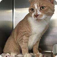 Adopt A Pet :: Sunshine - Philadelphia, PA
