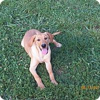 Adopt A Pet :: Maguire - Boston, MA