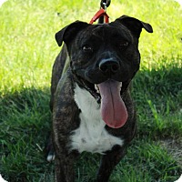 Adopt A Pet :: Sunshine - Corrales, NM