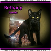 Adopt A Pet :: Bethany - Richmond, CA