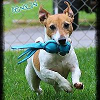 Adopt A Pet :: Benson - Shippenville, PA
