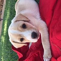 Adopt A Pet :: Jupiter - Crestline, CA