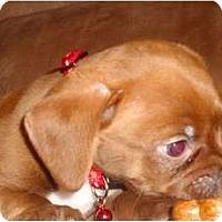 Adopt A Pet :: Meatball - Glen Burnie, MD