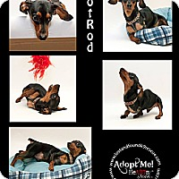Adopt A Pet :: HotRod~ADOPTED! - Troy, OH