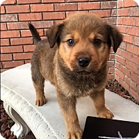 Adopt A Pet :: Ru - Hamburg, PA