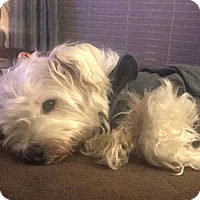 Adopt A Pet :: Gus - Omaha, NE