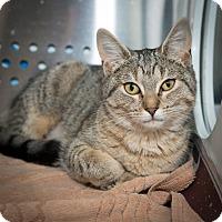 Adopt A Pet :: Tanzi - New York, NY