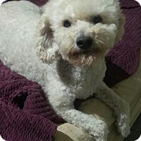 Adopt A Pet :: Toby - Las Cruces, NM