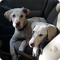 Adopt A Pet :: James - Huntsville, AL