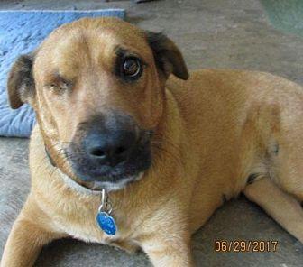 Labrador Retriever/Black Mouth Cur Mix Dog for adoption in Wakefield, Rhode Island - Hope