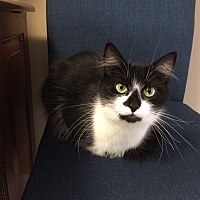 Adopt A Pet :: Cookie - Medway, MA