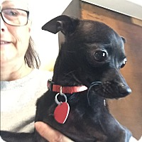 Adopt A Pet :: Zip - Acworth, GA