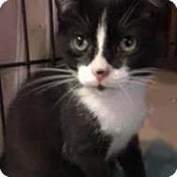 Adopt A Pet :: Taylor - Queens, NY