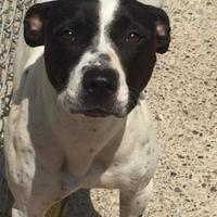 Adopt A Pet :: Linda - Charleston, WV