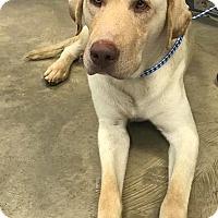 Adopt A Pet :: Clark - Jay, NY