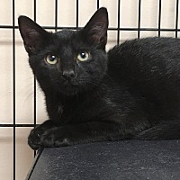 Adopt A Pet :: Juno - East Brunswick, NJ