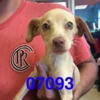 Adopt A Pet :: FRITZ - Kiln, MS