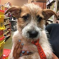 Adopt A Pet :: Teddie - Pembroke, GA