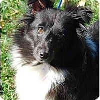 Adopt A Pet :: Angel - Sterling, VA
